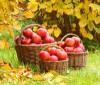 Frugtboost din dag